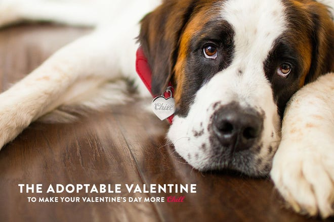Coors Light is helping to cover dog adoption fees across the country for Valentine's Day.