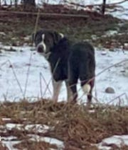 A photo posted by Candor Dog control of a missing dog named Odin led him to his owner, Brenda Black, of Montrose.