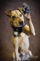 Cucumber is a 3-year-old, large terrier mix currently at the Fox Valley Humane Association. He is looking for a home where he can be the only pet and someone who can devote time to his training.