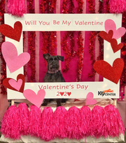 Take a free photo of your canine valentine in this delightful photo booth at K9 Center of East Tennessee, 11225 Threadstone Lane. Stop in through Feb. 14 from 7 a.m. to 7 p.m. to snap a picture and check out the doggy day care and training facility. Full information on Facebook or call 865-310-2800. (2020)