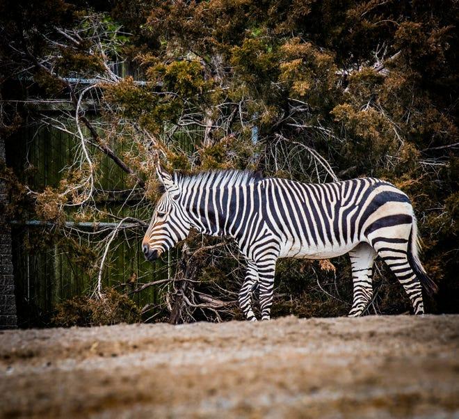 Louisville Zoo's new addition