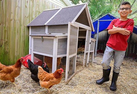 Nine-year-old Cole stands next to his chicken coop he keeps beside his mother's home in St. Augustine Beach on Jan. 29. Cole, who suffers from traumatic brain injury, keeps the birds as emotional support animals.