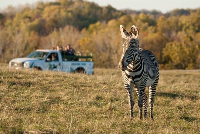 The Wilds is a private, non-profit safari park and conservation center managed by the Columbus Zoo and Aquarium.