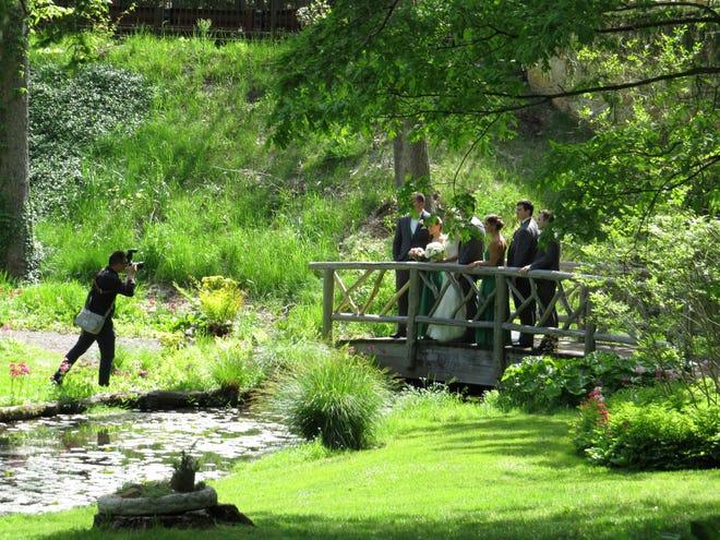Wedding photography at Leonard J. Buck Garden in Far Hills.