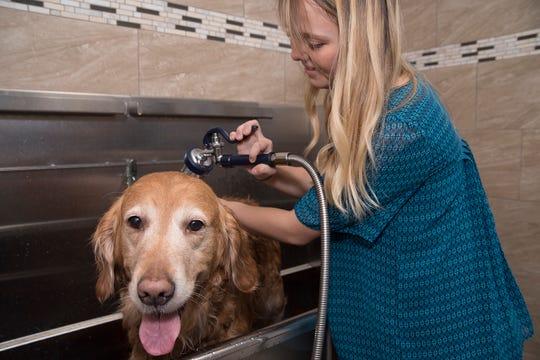 Feeders Supply Pet Wash