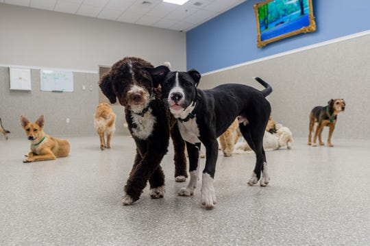 Dog owners can relax while their pets enjoy playtime with other guests at K9 Resorts Daycare and Pet Hotel.