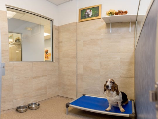 Guests enjoy privacy in their own room at the K9 Resorts Daycare and Luxury Pet Hotel.