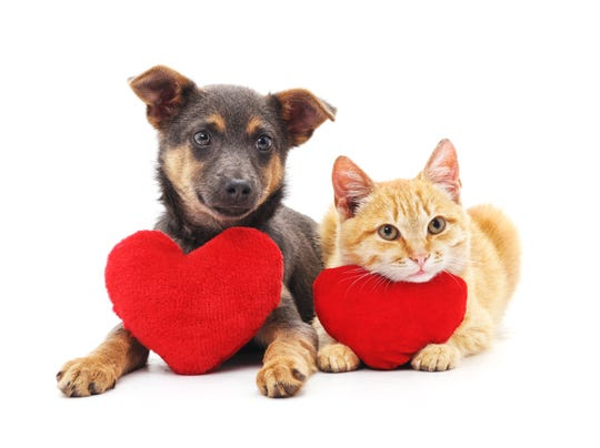 The Vanderburgh Humane Society is offering Cuddlegrams for Valentine's Day.