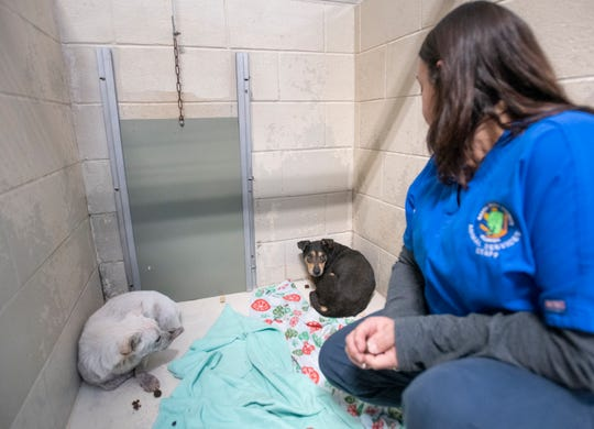 Kennel tech Tara Deaguilera checks on two of the dozens of recently rescued dogs at the Santa Rosa County Animal Services in Milton on Friday.