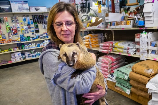 Christina Kinde, owner of Timber Creek Petting Farm, holds Dora, a 12-year-old Coatimundi, Friday, Feb. 7, 2020, at Farmer Jahn's Feed and Seed LLC in Croswell. Kinde will be hosting a fundraiser at the store Sunday, Feb. 16 at 1:30 p.m.