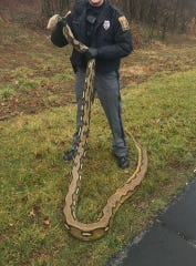 Springettsbury Township Police found a dead 15-foot python in the 1500 block of Whiteford Road Thursday, Feb 6, 2020.