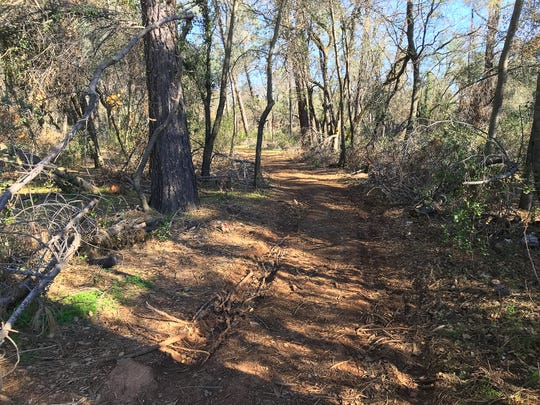 A dirt path runs through wooded, undeveloped property that leads to land where Costco wants to build its new store in Redding off Bechelli Lane near South Bonnyview Road in south Redding.