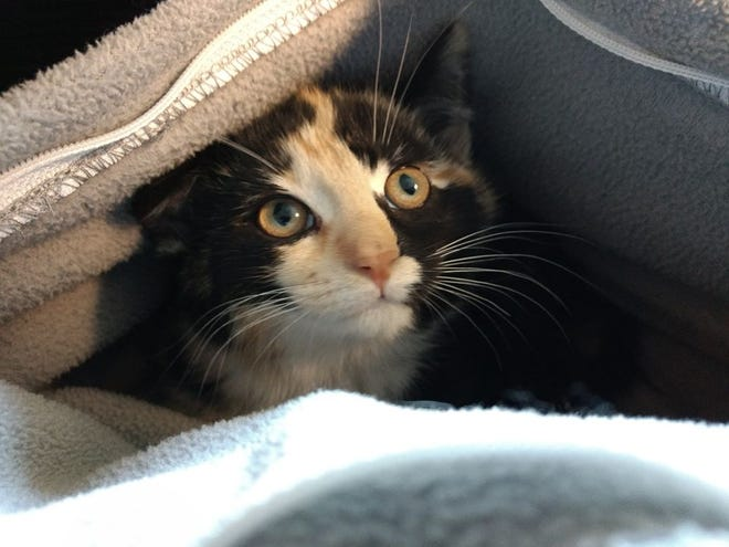 Scooter's adoption fee would be $20, which includes her spay surgery, vaccines, and microchip + registration.