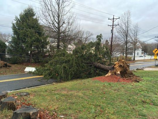 A downed tree blocks Old Capital Trail near Saint James Road Friday.