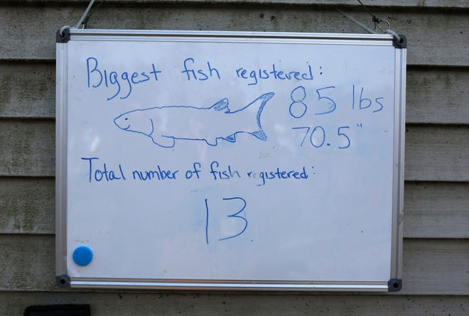A white board tells at a glance how many fish and what was the biggest sturgeon speared and registered at Jim and Linda's Supper Club registration station, Saturday, February 8, 2020, in Pipe, Wis.