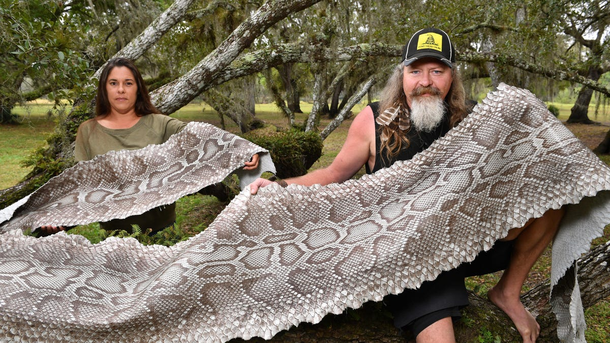 Snake Hunter Battles Burmese Pythons Barehanded On Discovery Channel Brittany borges is an actress, known for guardians of the glades (2019) and python challenge (2020). snake hunter battles burmese pythons