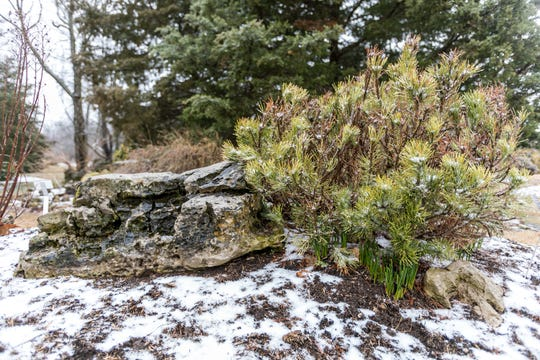 Flowering bulbs are already peeking up from beneath an evergreen at the Winter Garden. Adding structural elements such as stones is another way to bring texture and structure to a garden landscape.