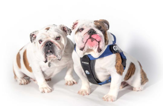 Griff, left, will retire as Drake's live mascot June 30. Griff II, right, will take over the role July 1.