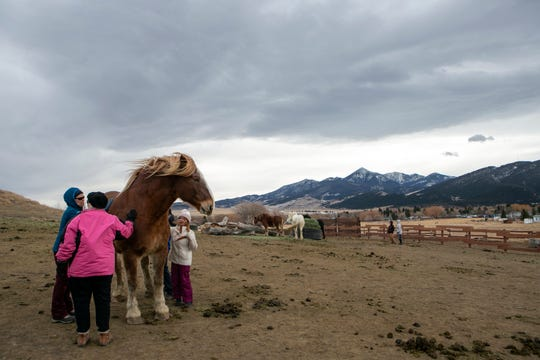 People pet a horse during a Jan. 4 open house at United In Light Draft Horse Sanctuary west of Livingston.