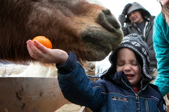 Kenneth Beyer, 4, winces as a horse nibbles on his hat during a Jan. 4 open house at United In Light Draft Horse Sanctuary near Livingston.
