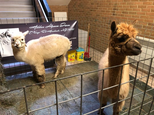 The S-VE Sportsman Show was another great success this year. The alpacas of Hidden Farm Alpacas are always a favorite draw for visitors of all ages.