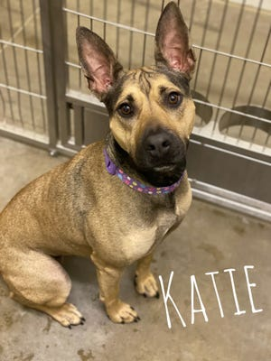 Katie is a 1-year old shepherd mix who loves being with people.