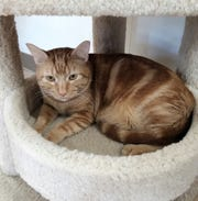 Seabert is looking forward to a visit from you at Sun Cities 4 Paws Rescue, 10807 N. 96th Ave., Peoria. Call 623-773-2246 after 10 a.m.
