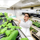 "A worker in Qiang ""Shawn"" Chen's lab at ASU takes care of the plants that he uses to create vaccines against viruses. Chen is one of three university researchers working on vaccines to combat the new coronavirus."