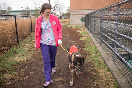 Lor takes a walk at MU's College of Veterinary Medicine Veterinary Health Center as he recovers.