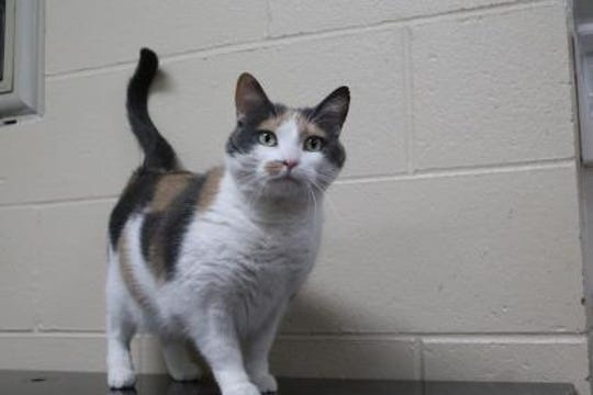 Sophie is 6 years old and is up for adoption at the Adams County Humane Society.