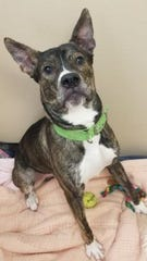 Cain is a 4-year-old mixed-breed dog who has been at the South Wood County Humane Society since September.
