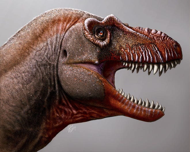 Image result for a new species of tyrannosaur thana