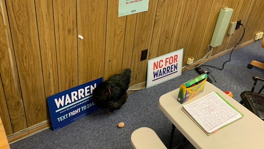An unidentified chicken made a visit to an Asheville campaign office for presidential candidate Elizabeth Warren.