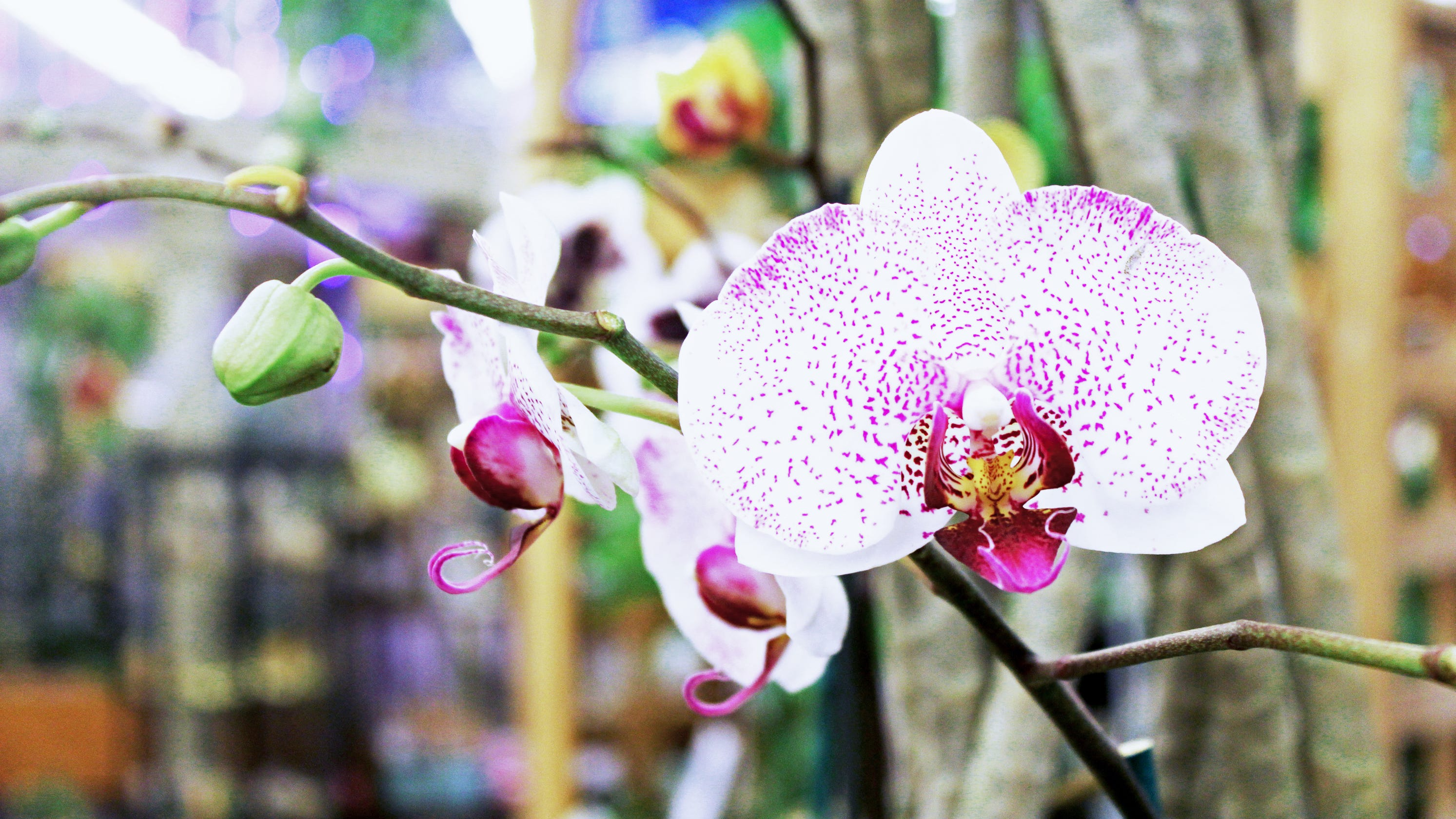 Orchids Are Losing Their Fussy Reputation And Easier To Grow