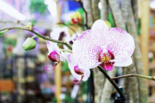 Who says orchids are fussy? Experts say with the right species and conditions -- and patience -- anyone can grow them.
