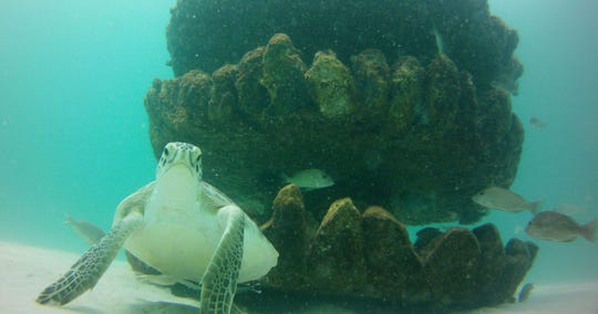 The Santa Rosa Island Authority and Escambia County are partnering to install four new snorkeling reefs in the Gulf of Mexico and Santa Rosa Sound.