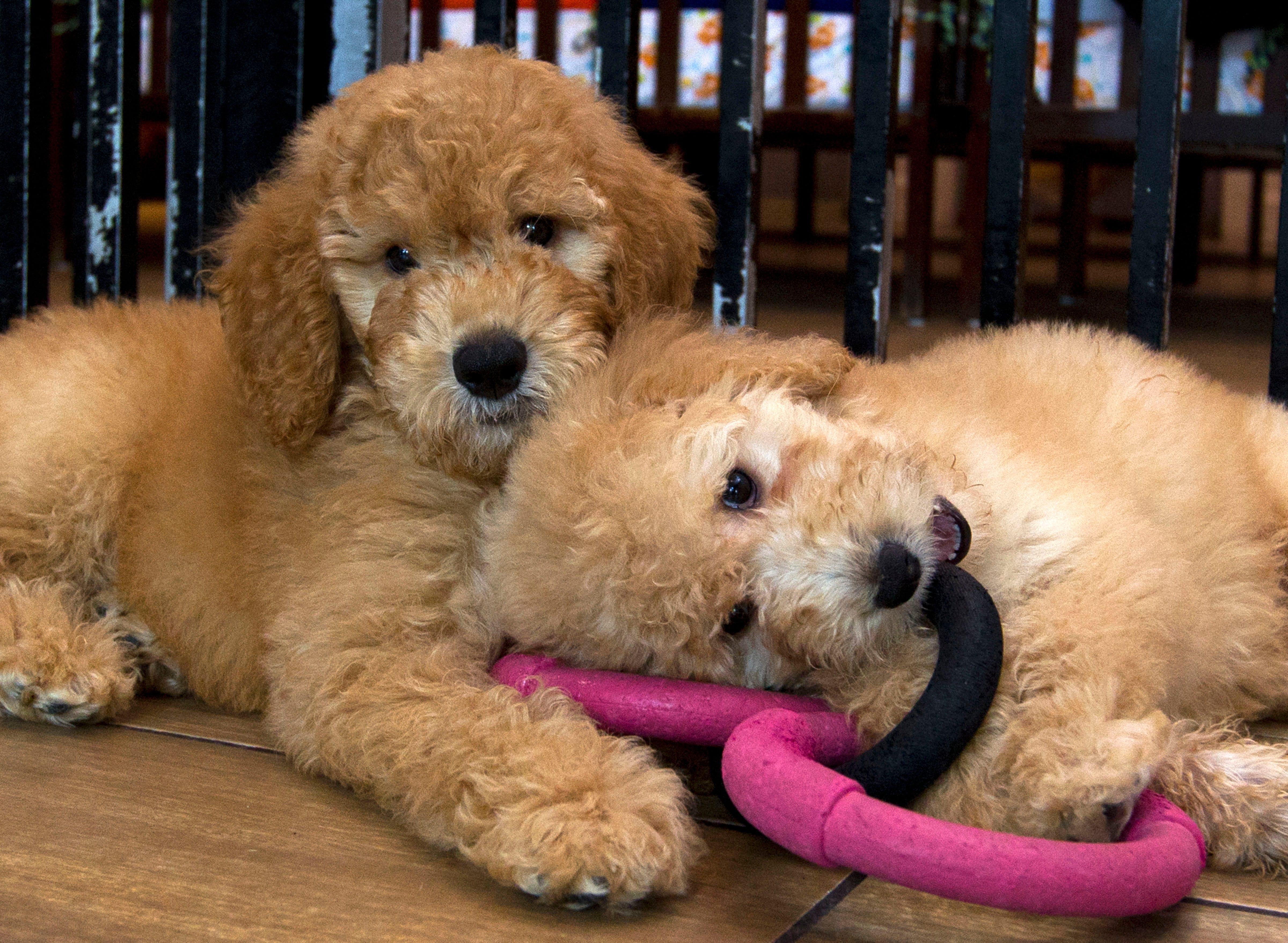 Maryland S Puppy Mills Ban Impacting Retail Pet Stores Upheld