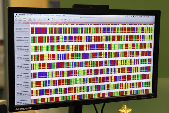 Kristen Pascal, a senior research and development specialist, working on a treatment for people exposed to the novel coronavirus outbreak that originated in China, views the open-source DNA sequence online, at Regeneron in Tarrytown, New York Feb. 10, 2020. The process involves injecting pseudo-coronavirus into genetically altered mice that produce human-like antibodies.