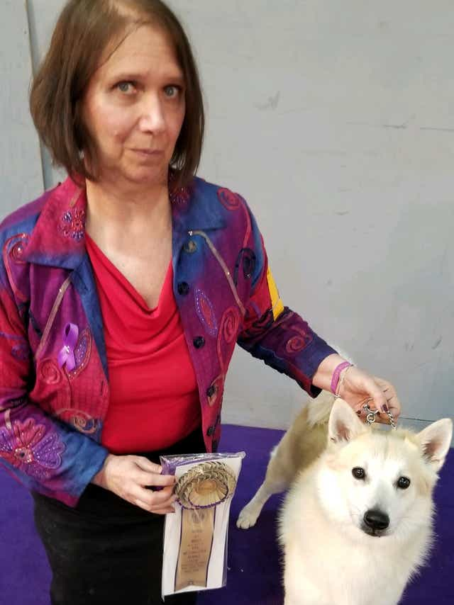 Wilmington Dog Wins Best Of Breed Others Ribbon At Westminster