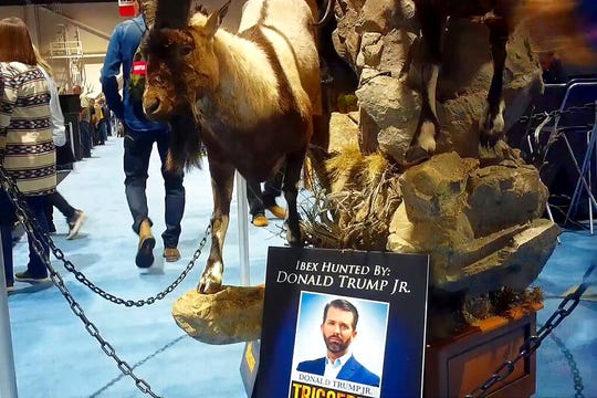 Taxidermy at the Safari Club International's 2020 annual convention, that was held Feb. 5-8, 2020, in Reno, Nevada. An avid hunter, Donald Trump Jr. was among the featured speakers at the SCI convention last weekend.