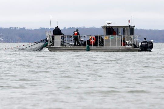 Nets are put into Smith Bay on Kentucky Lake near Golden Pond, Ky., during a roundup of Asian carp Feb. 5, 2020.