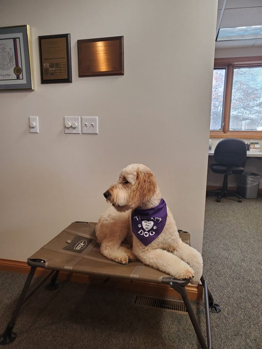 """Stella is in training at """"Tails for LIfe"""" to be a therapy dog at the dental practice of Dr. David Pieper in Kiel."""