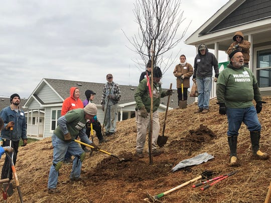 Volunteers from Trees Knoxville plant trees at one of KCDC's newest developments – the Cottages at Clifton. Jan. 25, 2020.