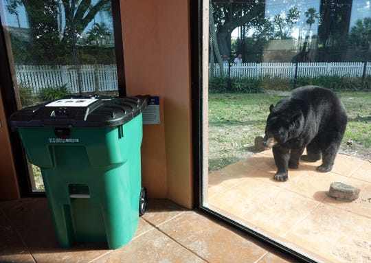 A new bear-resistant garbage container is on display at the Florida Black Bear exhibit and the Naples Zoo. Collier County will offer the cans at a subsidized price starting Friday, February 14, 2020.