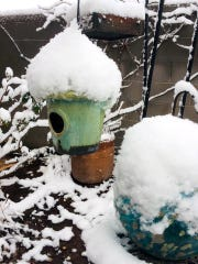 Debbie Troyer took photos of her backyard.