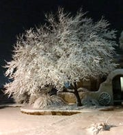 This photograph of a dusted tree was submitted by Becky Quarrell.