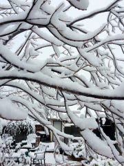 Artistic tree limbs provided by Debbie Troyer