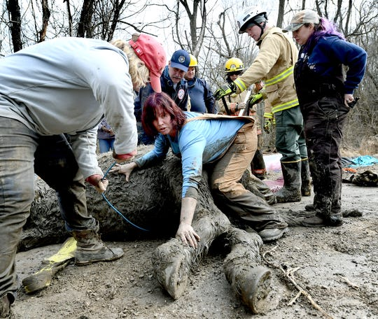 Kathi Goodman of Fawn Township, center, and others try to get Tonka to his feet after the horse was found mired in mud in the township on Feb. 12, 2020. The group used a sling and backhoe to try to right the horse, but Tonka couldn't be saved. Bill Kalina photo