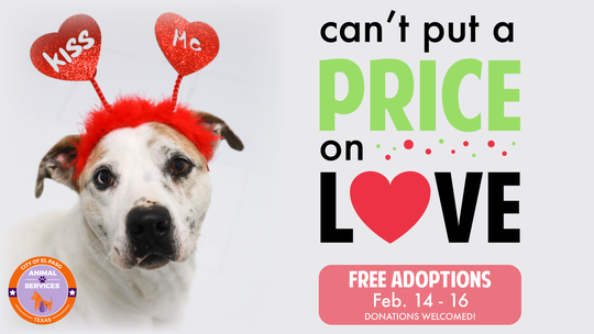 Animal Services pet adoption event.