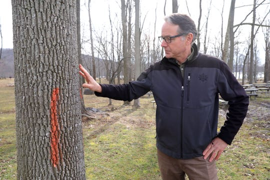 Ed McGowan, the Palisades Interstate Parks Commission regional director of science, talks about the white ash trees that are being infested by the emerald ash borer at Rockland Lake State Park Feb. 12, 2020. The trees are marked to be taken down.